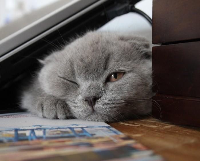 pretty_litter_sad_cat