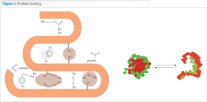 protein folding PH
